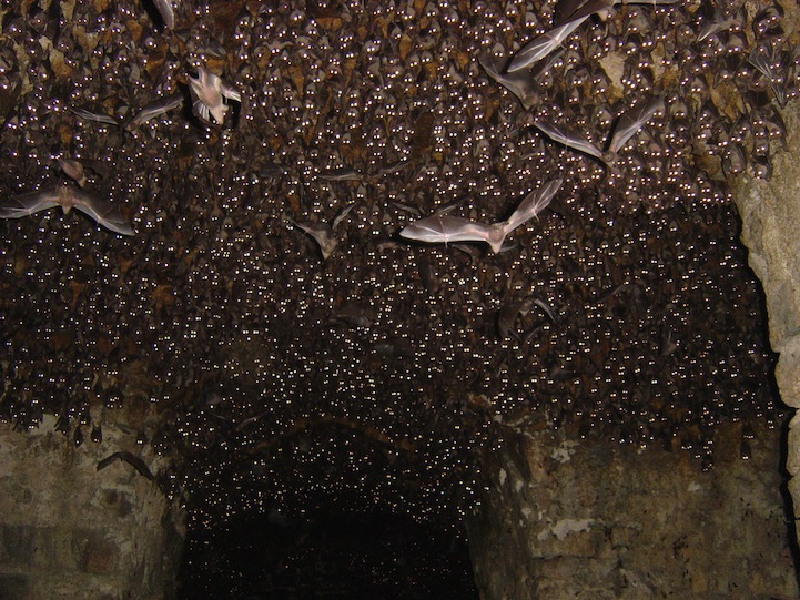 Bats Do Not Always Turn Left When Leaving A Cave - Unreal Facts ...