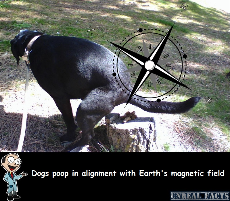 dogs poop in alignment with magnetic field study finds