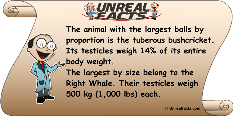 Which Animal Has Biggest Balls
